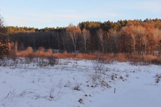 photo of sunny January afternoon, winter woods