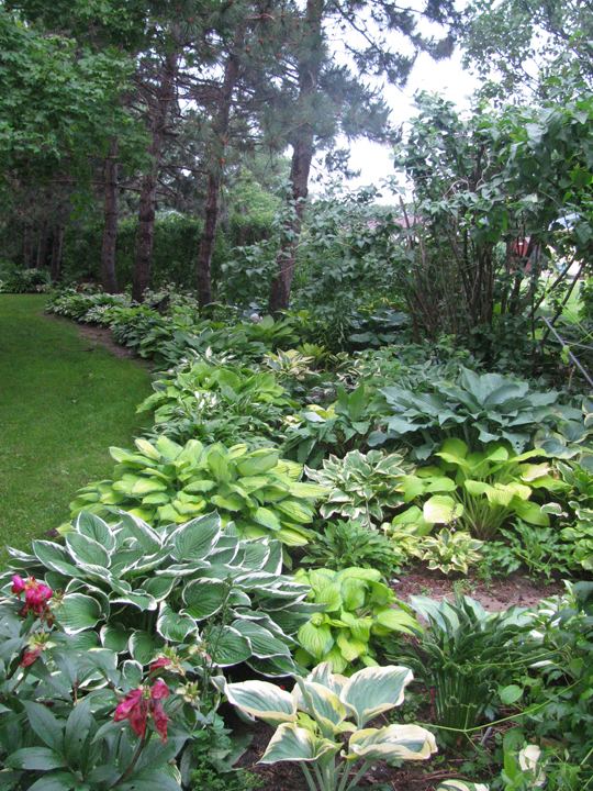 ideas about Hosta Gardens on Pinterest Shade