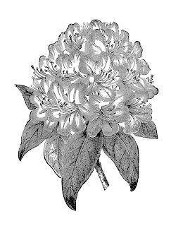 plant flower clip art