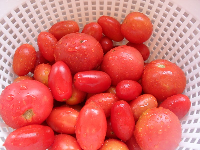 Out Of The Garden Freezing Tomatoes