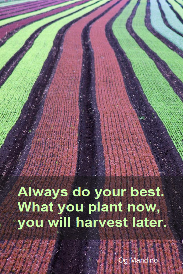 visual quote - image quotation for LAW OF ATTRACTION - Always do your best. What you plant how, you will harvest later. - Og Mandino
