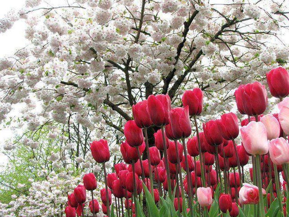 Resultado de imagen para paisajes con flores