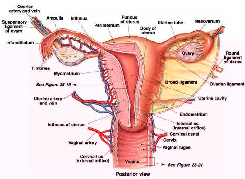 6 Cara Menjaga Kesehatan Reproduksi Wanita alami
