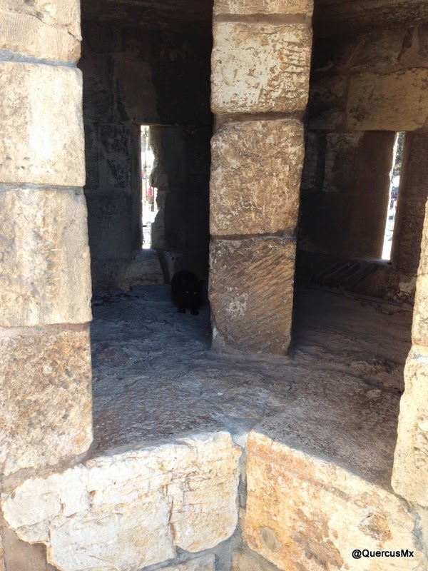 A black cat watches in the ramparts of Jerusalem