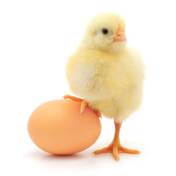 The Law Of Attraction & The Chicken & The Egg