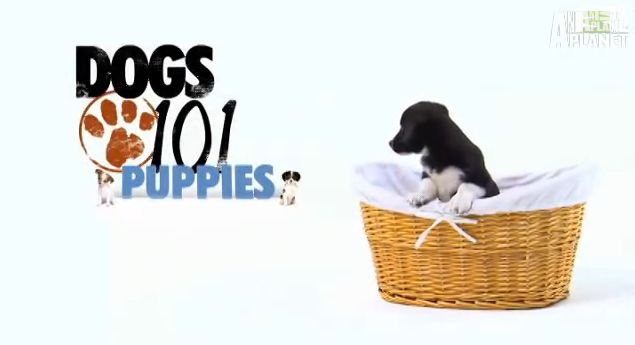 puppy training, puppy training videos, how to train your puppy from home, home training for puppies