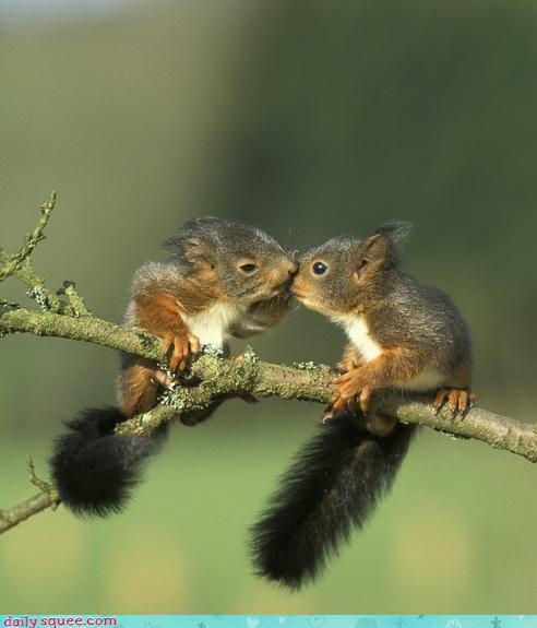 two Forest Squirrel