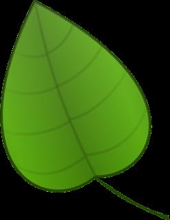 desenho de folha