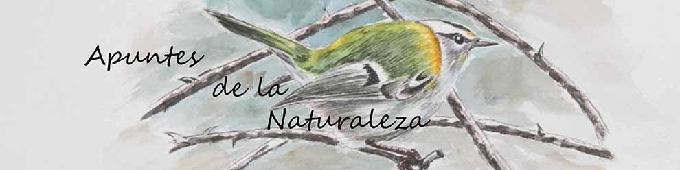 Apuntes de la naturaleza