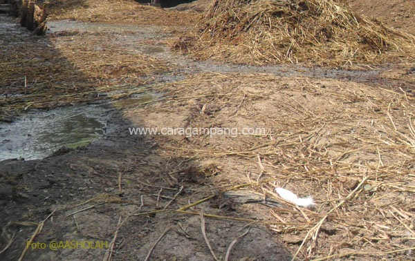 Pengaruh Organisme Tanah terhadap Tanaman Tingkat Tinggi
