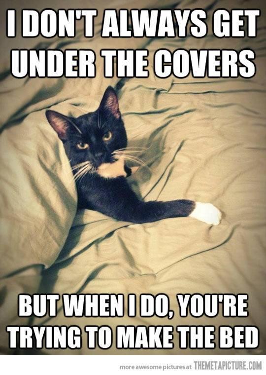 http://1.bp.blogspot.com/-WFxKX9d0E9I/UgAforP2KuI/AAAAAAAABmU/QgbQRl0ubjU/s1600/cat+under+covers.jpg