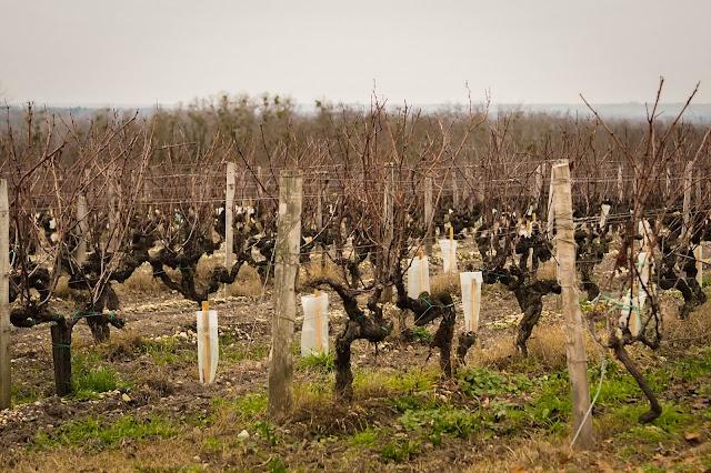 Voyages: Sortie dans le vignoble bordelais, Sauternes