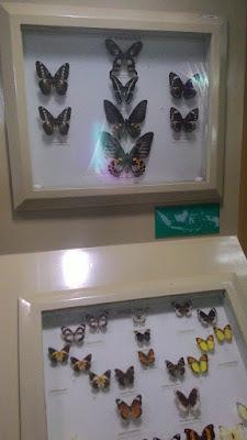 Museum Serangga TMII
