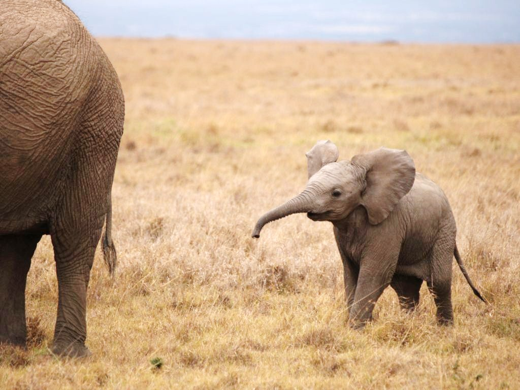 Edge of the plank cute animals baby elephants - Cute elephant pictures ...