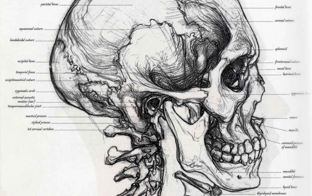 Famous Anatomy For The Artist By Sarah Simblet Gallery - Image of ...