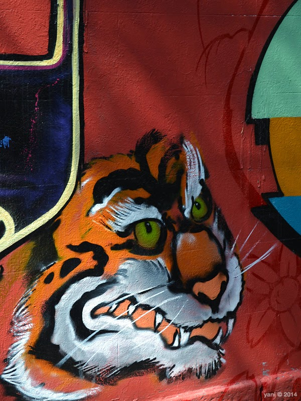 newtown tiger