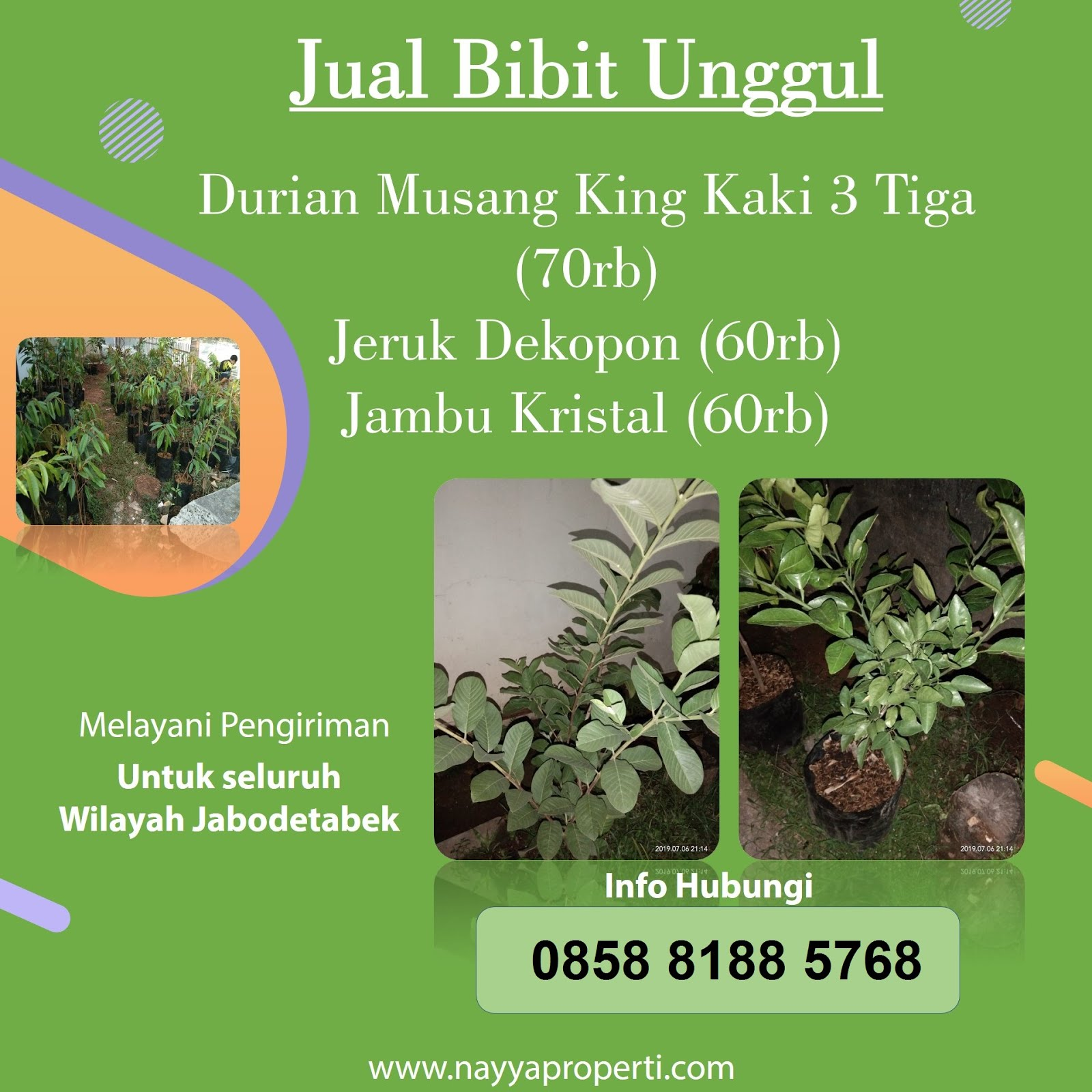 Jual Bibit Unggul Durian Musang King, Jeruk Dekopon, dan Jambu kristal