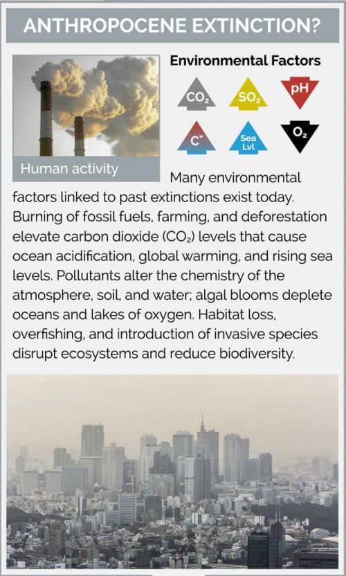 Anthropocene Extinction