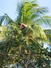 Baracoa jongen in palmboom