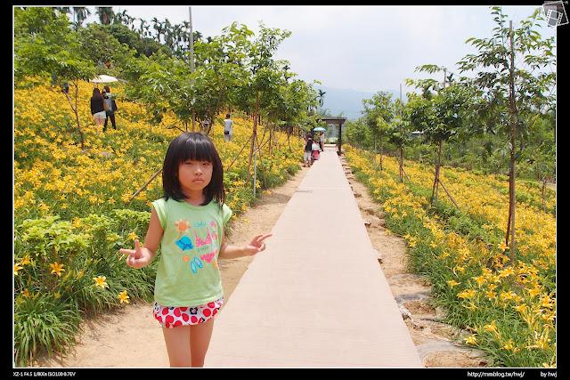 2015-05-09嘉義梅山鄉-橫山屏休閒園區-滿山遍野的金針花開
