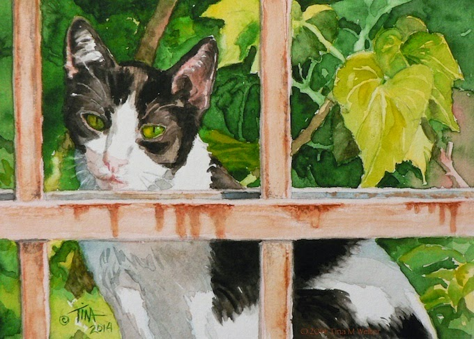 """Envy"" 5""x 7"" watercolor on 200lb coldpress paper © 2014 Tina M Welter  Black and white cat behind fence bars with grape leaves as a background."