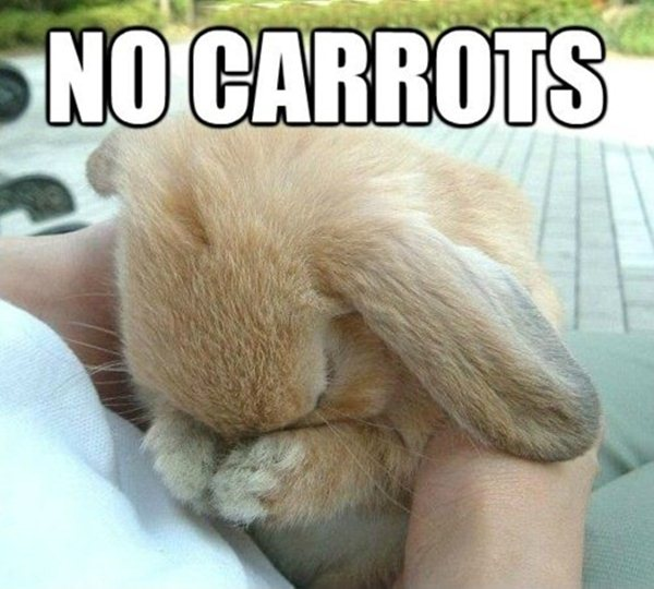 animal pictures with captions, no carrots