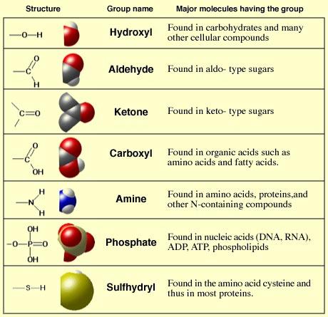 gugus fungsional dalam biologi