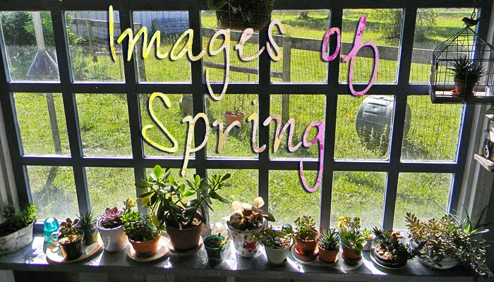Images of Spring
