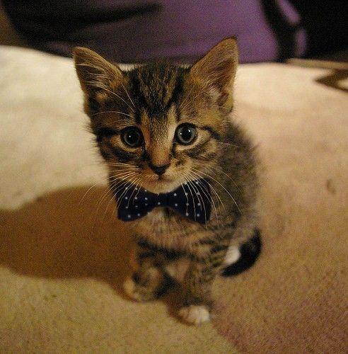 Cute Kitty Watching you