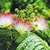 Το πιο ντροπαλό φυτό στον κόσμο!