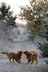 Rusty Pups in a Frosted World