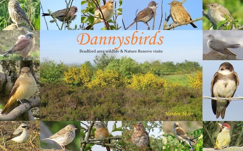 Dannysbirds