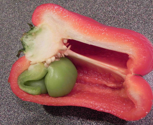 how to know if a bell pepper is bad