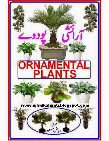 Ornamental Plants Urdu Book