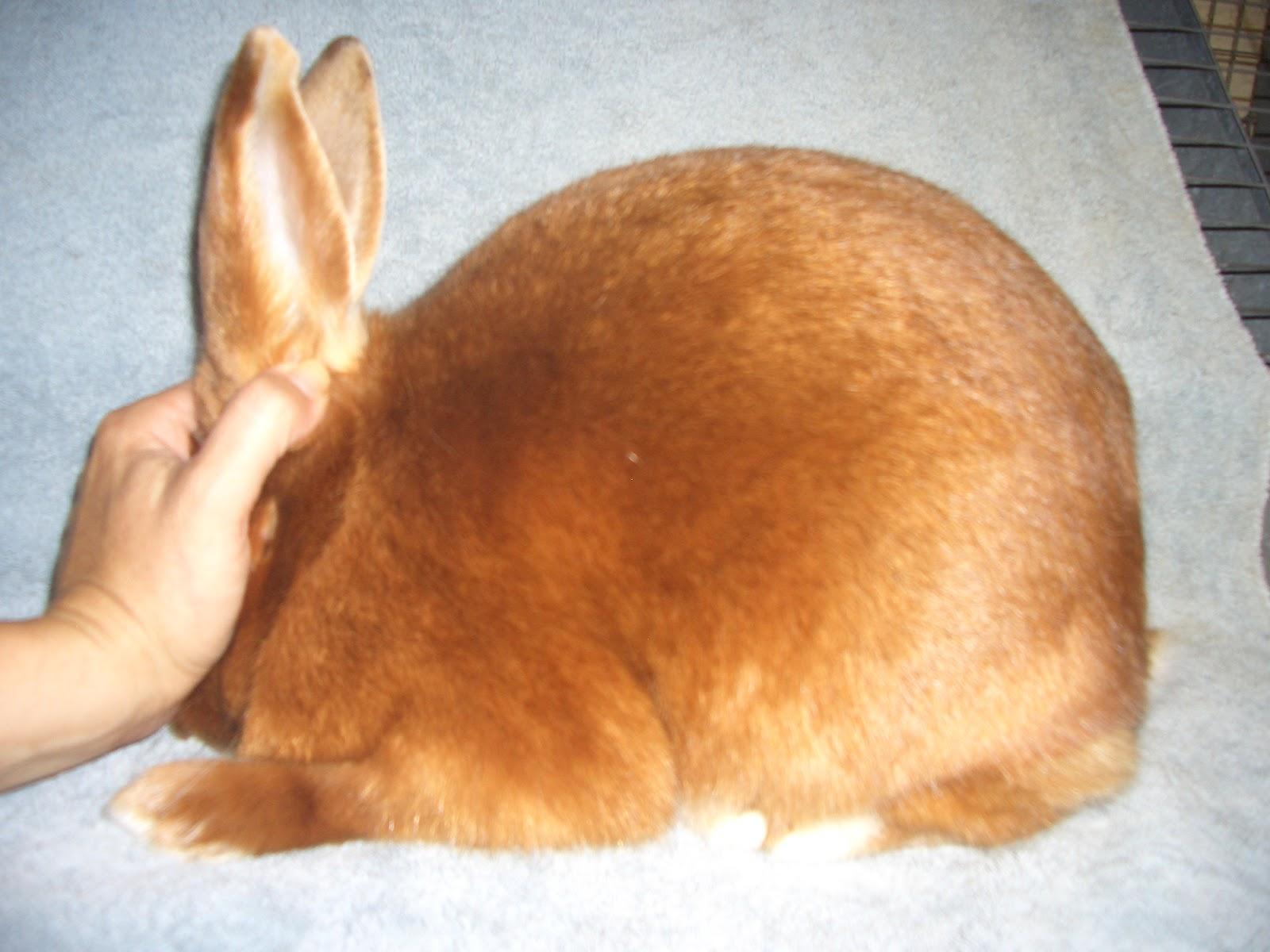Mini Satin Rabbit Red satin 6 8 doeRed Mini Satin Rabbit