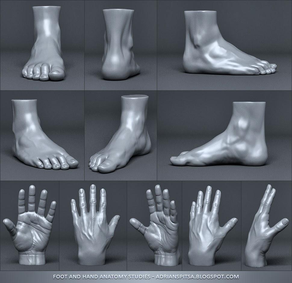 Hand & Foot Sculpting Studies   Adrian Spitsa - 3D Artist