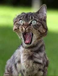 cat siren