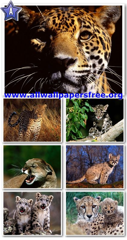 115 Stunning Wild Cats Wallpapers 1280 X 1024