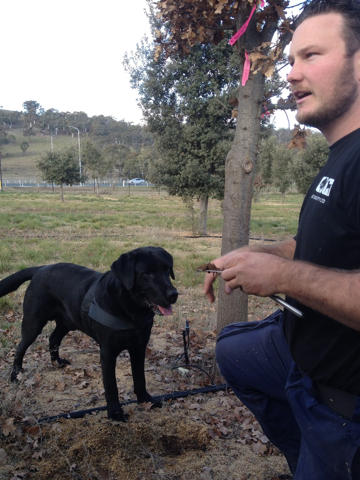 Can Police Dogs Detect Mushrooms