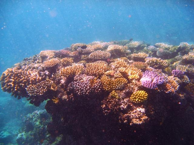 Gran Barrera de Arrecife Australiana