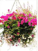 FIORI DA APPENDERE (fiori appesi)