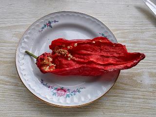 семена горького перца