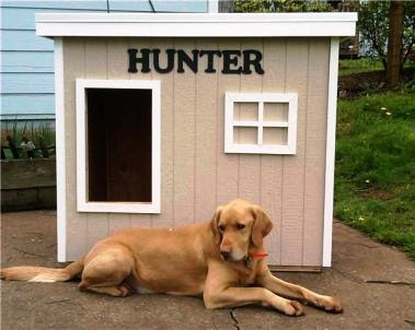 Dog's House for Hunter