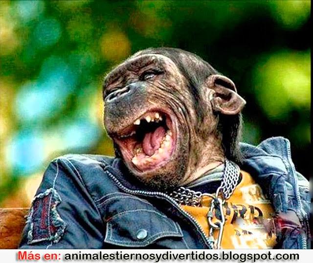 ANIMALES TIERNOS CON CARAS CHISTOSAS