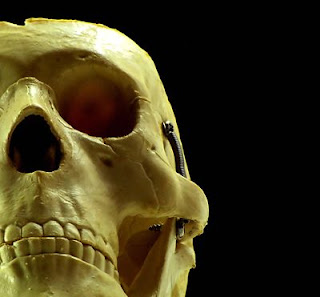 Skull on black; taken by Benjamin Miller; source: freestockphotos.biz/