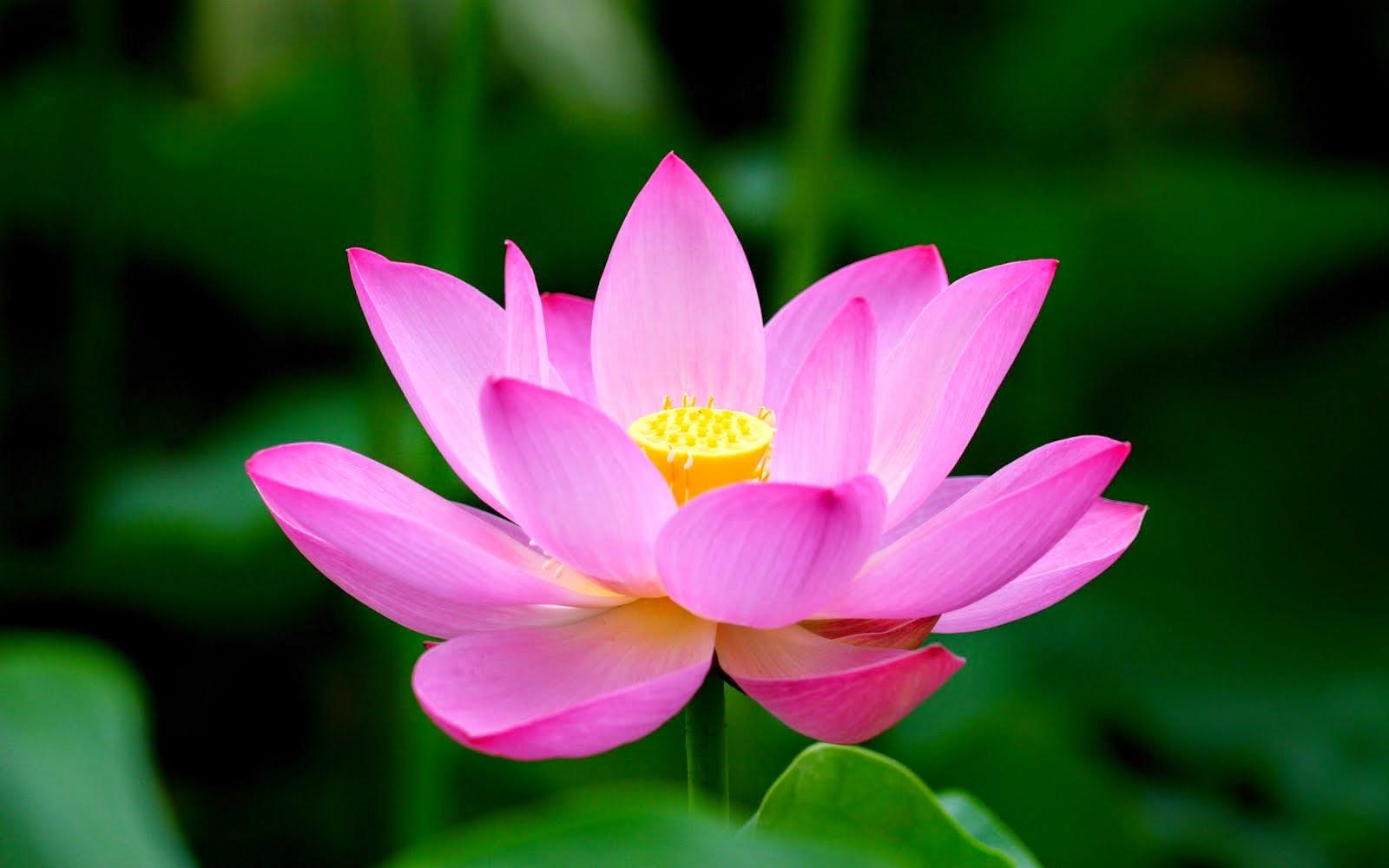 QIGONG-ul: o practică terapeutică antică pentru toate vârstele