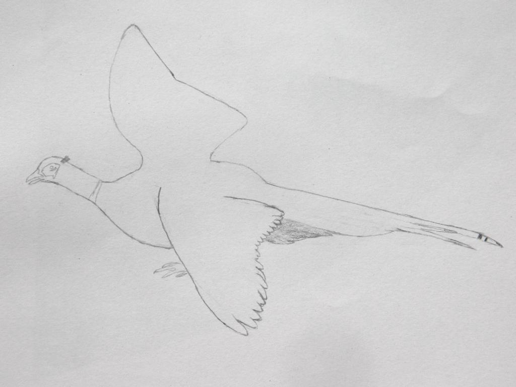Drawing 2 contour pencil