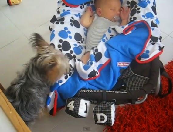 Dog Copies Baby Saying Mama To Get Food