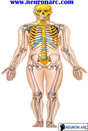 Axial & Appendicular Skeleton PPT