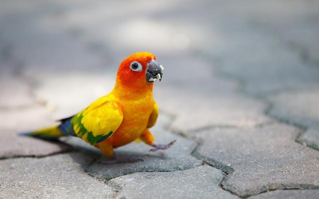 Hermoso Loro de Colores Brillantes - Imágenes de Aves Exoticas